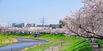 20210326 市内のさくら(小林)20210329_0009.JPG